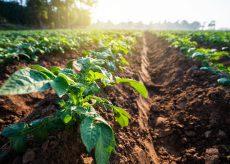 La Guida - Incontro tra contadini e cittadini nel nome di un cibo per tutti