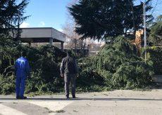 La Guida - Il vento fa disastri su strade e piazze con alberi spezzati