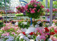 La Guida - Anche i fiori arrivano a casa, per non rinunciare al colore