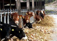 La Guida - La filiera del latte sta rischiando la crisi per il calo dei consumi