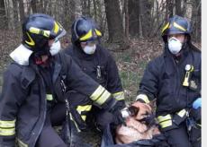 La Guida - Vigili del fuoco salvano un cane