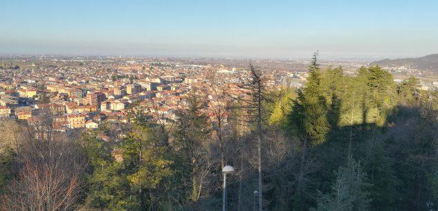 La Guida - Abbattimento alberi a Borgo San Dalmazzo