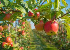 La Guida - Cia Agricoltori Italiani attiva un sistema di incontro domanda ed offerta nel mondo rurale