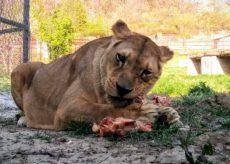 """La Guida - Un aiuto per il """"Parco Safari delle Langhe"""""""