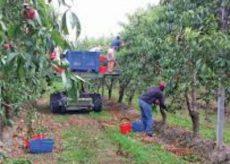 La Guida - Contributi alle strutture che ospitano gli stagionali della frutta