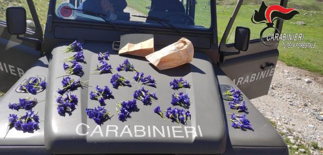 La Guida - Multe in montagna per auto, cani e fiori