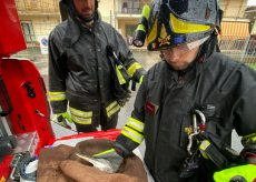 La Guida - Un airone salvato dai Vigili del fuoco a Costigliole Saluzzo