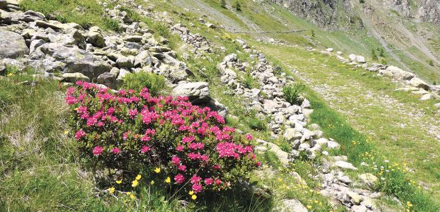 La Guida - Con i nostri lettori nel vallone di Sant'Anna di Bellino, in valle Stura e in valle Ellero
