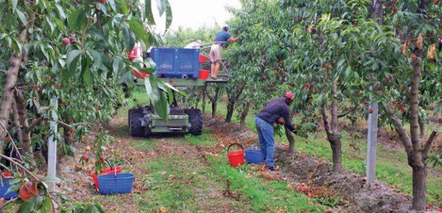 La Guida - Il campo per l'accoglienza degli stagionali della frutta di Verzuolo è pronto