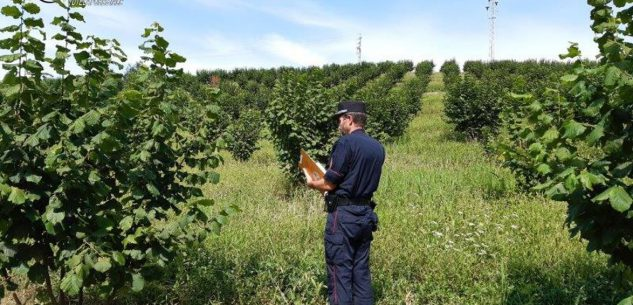 La Guida - Carabinieri Forestali: sanzioni per 21 aziende agricole su 26 controllate