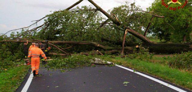 La Guida - Maltempo nel Cuneese, alberi caduti, pali pericolanti, danni e tetti divelti