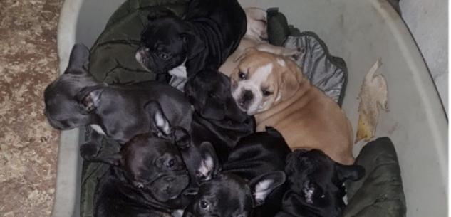 """La Guida - Operazione """"Spank"""" per contrastare il traffico internazionale di cuccioli di cane (video)"""