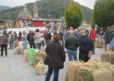La Guida - Martedì 22 settembre torna il Mercato delle castagne a Venasca