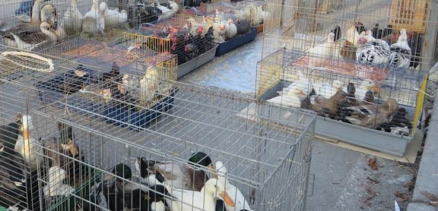 Mercato Piccoli Animali Fossano Calendario 2021 Torna a Fossano il mercato dei piccoli animali   La Guida   La Guida