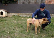 La Guida - Con il Covid, meno abbandoni di cani (video)
