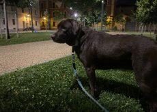 La Guida - Dalle 23 alle 5 non si può portare a spasso il cane