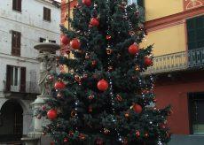La Guida - Alberi di Natale cercansi