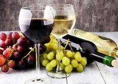 La Guida - Italia, prima produttrice di vino in Europa