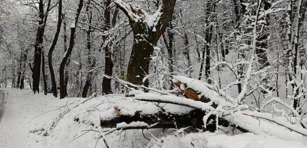 La Guida - Caduta di un albero in via Colletto a Peveragno