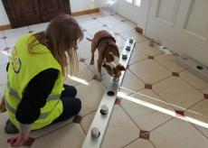 La Guida - Da febbraio cani anti Covid-19 all'aeroporto di Levaldigi
