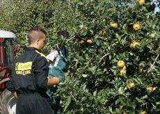 La Guida - Agricoltura e lavoro somministrato, risultati positivi in Granda
