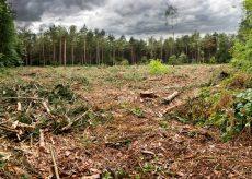 La Guida - La criminalità ambientale come un crimine contro l'umanità