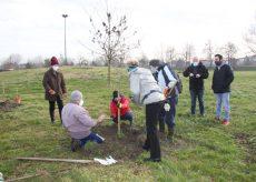 La Guida - Venti alberi nel ricordo dei giovani morti a Castelmagno