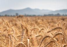 La Guida - Agricoltura e ambiente, si va verso la proroga dei fondi Psr