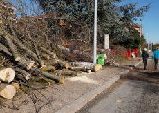 La Guida - Confreria, iniziato l'abbattimento degli alberi infettati con il tarlo asiatico