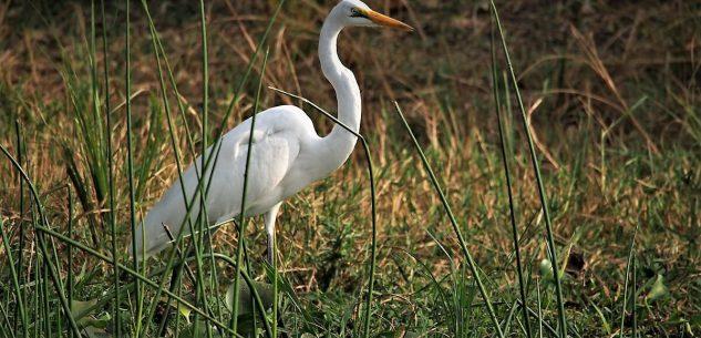 La Guida - Siti Natura 2000, poco conosciuti e tutelati e poco personale