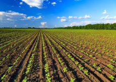 La Guida - Un'azienda agricola su cinque è in crisi per la chiusura della ristorazione