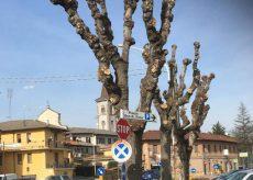 """La Guida - A Borgo San Dalmazzo """"sono rimasti dei totem non degli alberi!"""""""