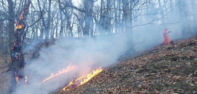 La Guida - Borgo, incendio boschivo sulla collina di Aradolo