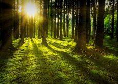 La Guida - Proteggere le foreste