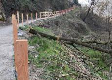 La Guida - Nuove recinzioni e barriere in legno a Rifreddo