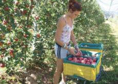 La Guida - Un'azienda agricola su cinque nel cuneese è under 35
