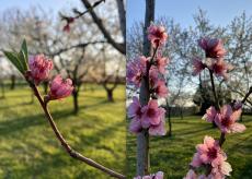 La Guida - Fruttinfiore, la passeggiata tra i frutteti fioriti è su web e in tv