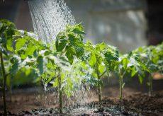 La Guida - Come fare l'orto 5, l'irrigazione
