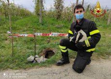 La Guida - Cucciolo di cane salvato dai pompieri