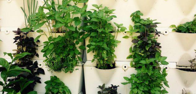 La Guida - L'orto sul balcone, la coltivazione a portata di mano