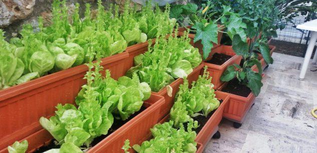La Guida - L'orto sul balcone 2, piante da coltivare a disposizione