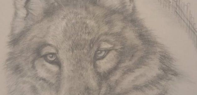 La Guida - Un giorno da lupi, camminata nei boschi di Busca