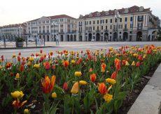 La Guida - Fioriti i tulipani nelle aiuole di Cuneo
