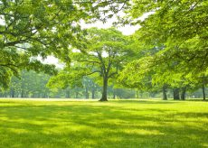 La Guida - Unione Europea, se ci sono alberi ci sono speranze