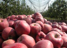 La Guida - La Valle Bronda, patria della mela sigillo Coldiretti