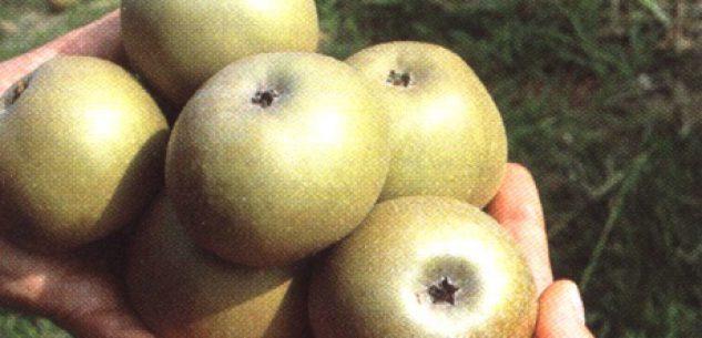 """La Guida - Tanta """"Granda"""" tra i prodotti agroalimentari tradizionali"""