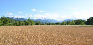 La Guida - Valorizzare le produzioni cerealicole di qualità