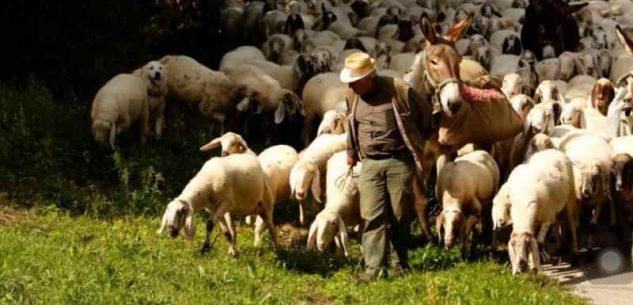La Guida - La Scuola di pastorizia, per il domani della nostra montagna e dei giovani
