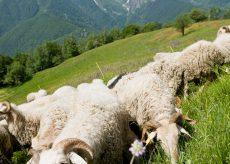 La Guida - Ecomuseo della pastorizia di Pontebernardo