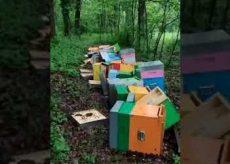 La Guida - Raccolti già 56.000 euro per aiutare Mattia a ricostruire l'apiario distrutto